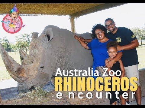 White Rhinoceros Encounter - Australia Zoo