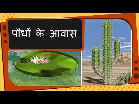 Science - Plant Habitat and adaptation - Hindi