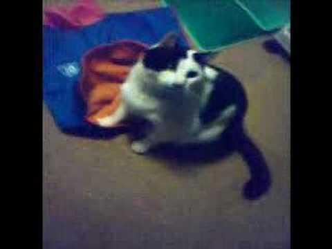 ぐるぐるに反応する猫