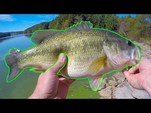 Fall Fishing for BIG Bass from the Bank (Rural Retreat Lake)