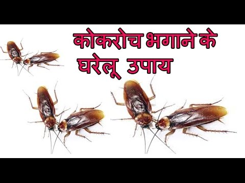 कोकरोच भगाने के घरेलू उपाय |Home Remedies To Get Rid Of Cockroaches from kitchen, home & Office