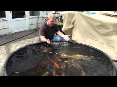 Koi Pond Water Garden Spring Clean Out New Jersey