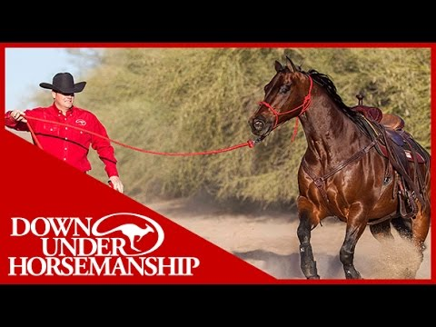 Clinton Anderson: What size halter should I get for my horse? - Downunder Horsemanship