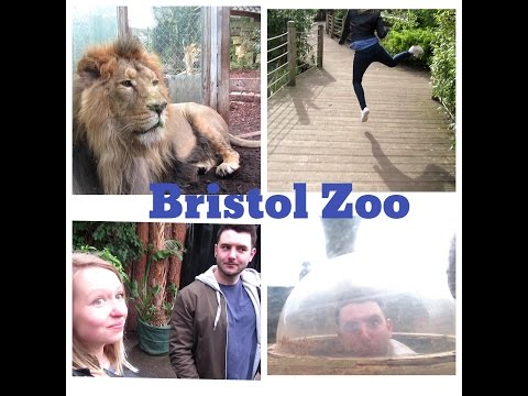 A Day With Me 12 - Bristol Zoo - Told Off For Feeding A Penguin!