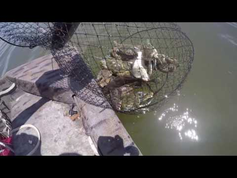 Fishing Whiting & Crabs Bolan Hall Beaufort, SC 8/7/2016