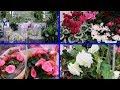Download ЛЕРУА МЕРЛЕН Шикарные комнатные цветы в LEROY MERLIN MP3,3GP,MP4