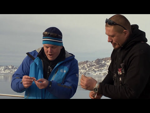 Cooking king crabs in Greenland - just caught by diver!