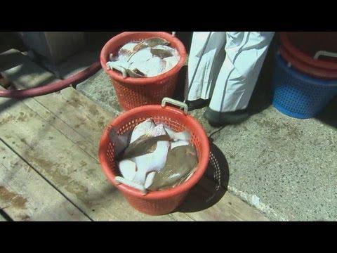 Regulations hurt struggling fishing industry