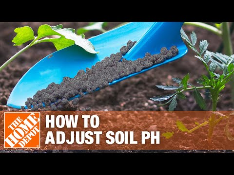 How To Adjust pH in Your Soil for Blueberries - The Home Depot