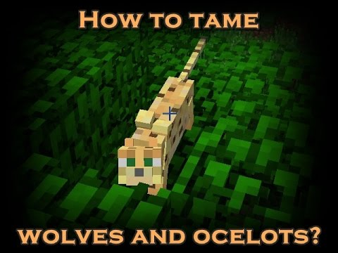 Minecraft: How to tame wolves and ocelots? [HD]