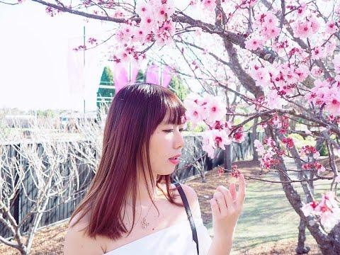 🌸 Cherry Blossom Festival | Auburn Japanese Garden 🌸