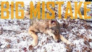 Download How Not to Coyote Trap: A Lesson Learned! Video