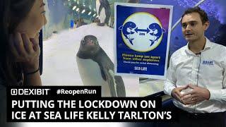 Putting the lockdown on ice at SEA LIFE Kelly Tarlton's | #ReopenRun