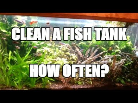 How to Clean a Fish Tank?