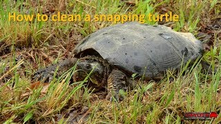 Download How to butcher a snapping turtle (GRAPHIC) Video