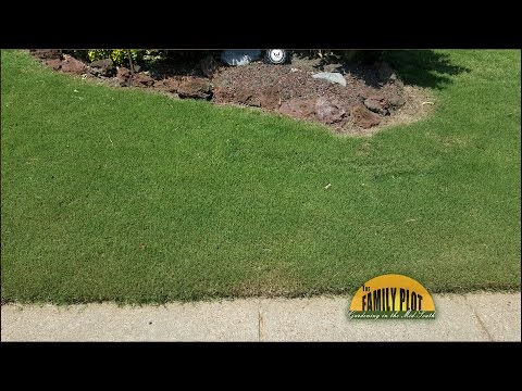 Q&A - What kind of bermuda grass do I have?