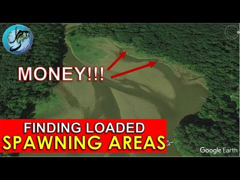 Find Magic Spawning Areas for Bass Using Google Earth! | Fish the Moment Live Stream