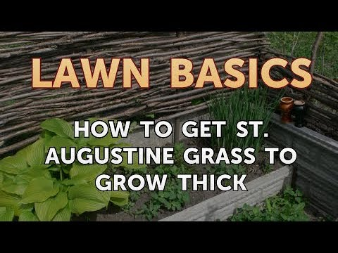 How to Get St. Augustine Grass to Grow Thick