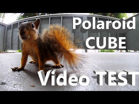 Polaroid Cube Video Test - Subject: Squirrels