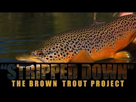 Stripped Down: The Brown Trout Project (Intro/Trailer)