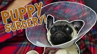 PUPPY SURGERY ON HIS FACE!
