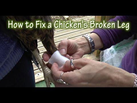 How to Fix a Chicken's Broken Leg