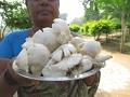 NATURE FRESH MUSHROOM GRAVY With White Rice Cooking in My Village | VILLAGE FOOD