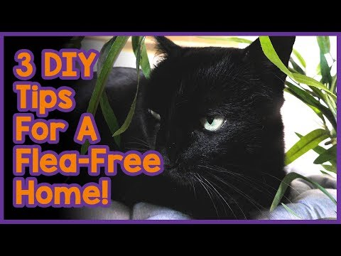 How to Get Rid of Cat Fleas in Your Home! 3 DIY Tips For a Flea-Free Home!