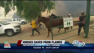Reporter saves horses from CA fires