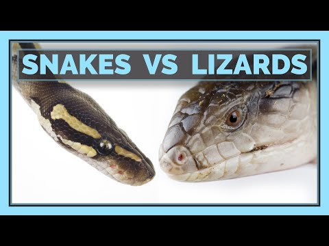 Snakes VS Lizards: Which Make Better Pets?