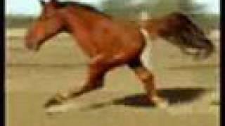 Retarded Running Horse (Original)