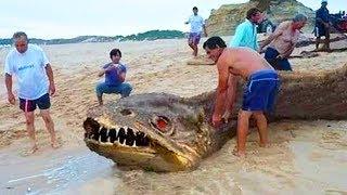10 DEADLIEST Animals You