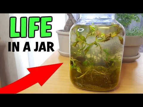 LIFE In A Sealed Jar: My First ECOSPHERE!