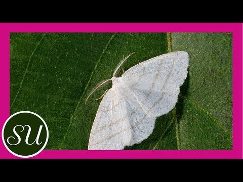 How To Get Rid Of Moths The Green Way