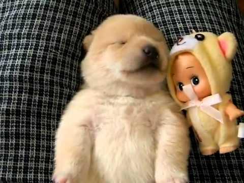 having night terrors puppy...