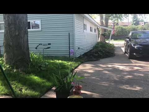 Morning Vlog Backyard Update