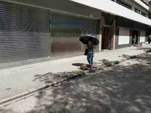 Woman taking her turtle for a walk in Hong Kong