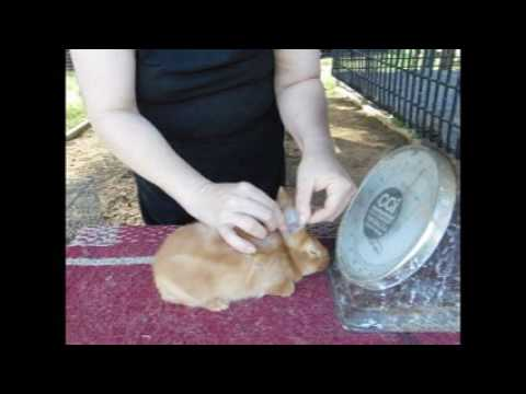 Weaning Ozarks Baby Bunnies 4/12/17