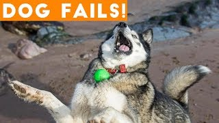 Dogs Have a Ruff Life Funny Fails Comp April 2018   Try Not to Laugh Animals Funniest Pet Videos