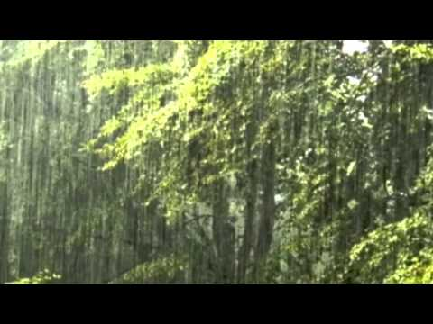 Long Soothing Rain   Sound Effect 12