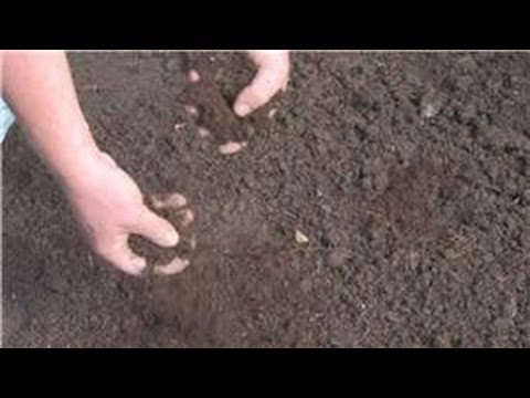 Lawn and Yard Help : How to Lay Grass Seed