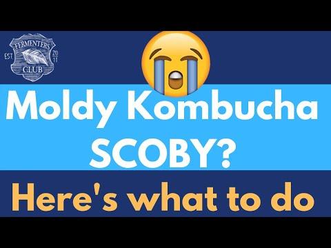 Oh No! Moldy Kombucha SCOBY!