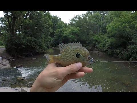 Fly Fishing Creek for Bluegill, Creek Chubs, Green Sunfish, Panfish, Longear - 2015