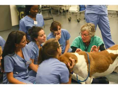 Campus Life at a Veterinary School