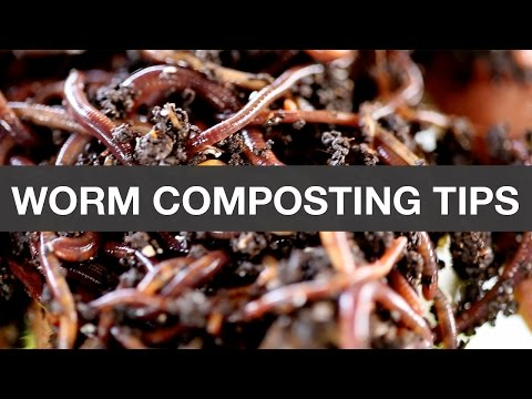 Worm Compost: A beginner's guide | Organic Terrace Garden