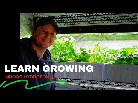 Learn Growing Lettuce Indoor HYDROPONIC SYSTEM Cheap Setup