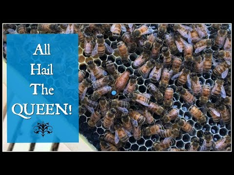 All Hail The QUEEN BEE!