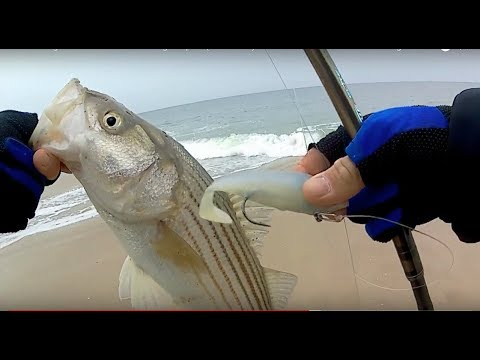 Surfcasting in December! - Catching Stripers(schoolies) BEFORE the Snow Storm! - Long Island, NY