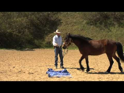 How To Teach Your Horse To Accept Tarps