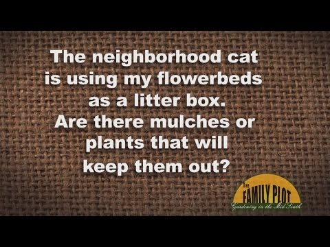 Q&A - How to Keep the Cat From Peeing In a Flower Bed